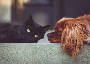 4. 10. – Světový den zvířat