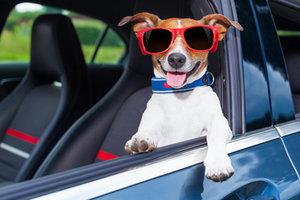 Cestujeme se zvířaty – praktické rady