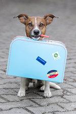 Cestujeme se zvířaty do zahraničí – co říká legislativa