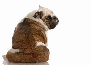 Choulostivý problém psů