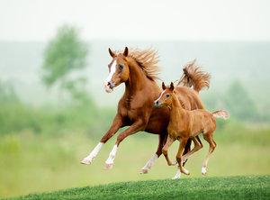 Chraňte koně před obtížným hmyzem přirozenou cestou
