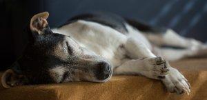 Jak pomoci vašemu psovi, když oslepne