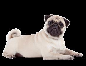 Jak správně přistupovat k nadváze u Vašeho psa