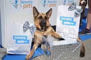 Mezinárodní výstava psů INTERCANIS Brno