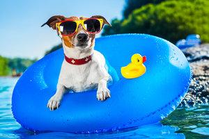 Na co si dát pozor při koupání psa venku