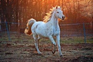 Péče o klouby koní
