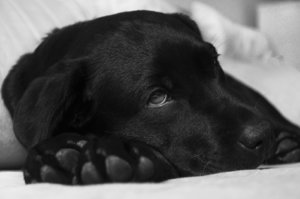 První pomoc pro psa, který se otrávil jídlem