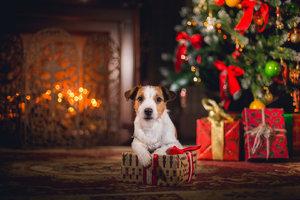 Sváteční čas pohody a bezpečí pro zvířata