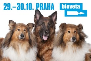 Výstava psů Prague Expo Dog Double CACIB