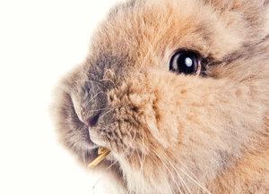 Zásady správné výživy hlodavců a králíků